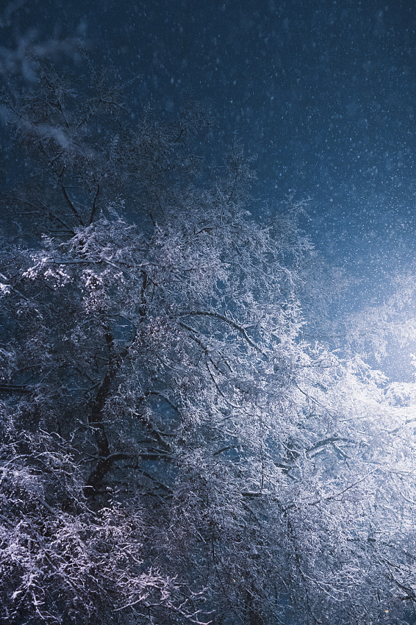Snowing by Jovana Rikalo on 500px.com