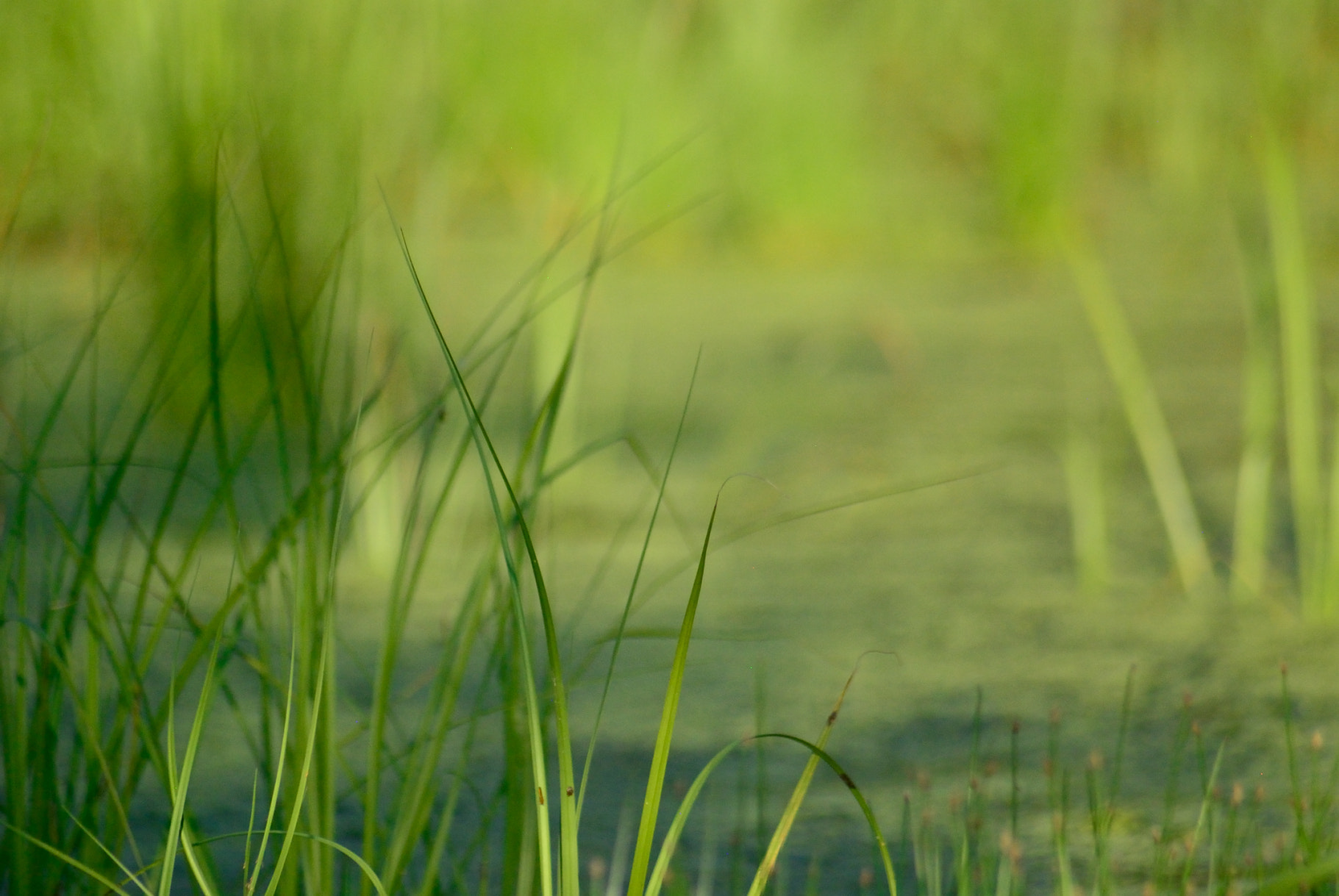 Photograph Swamp Grass by Anastasia Hill on 500px