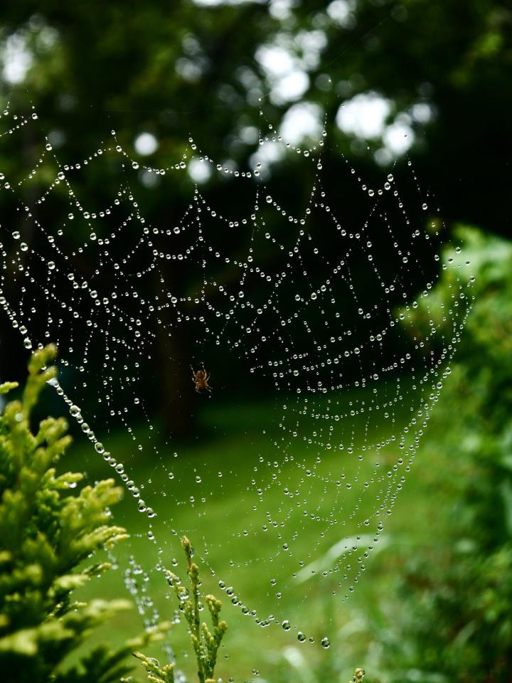 Photograph Spiders Web by Michael Carter on 500px