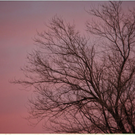 Tree and Sky , Canon POWERSHOT ELPH 340 HS