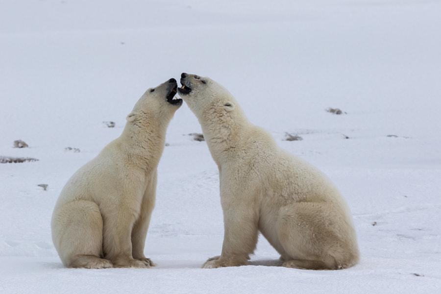 Polar Karaoke