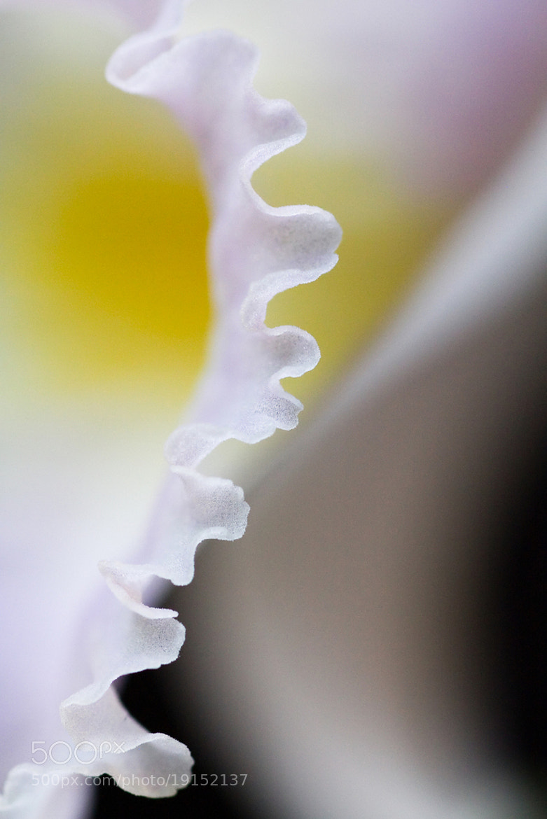 Photograph Laelia by Cheype Sébastien on 500px