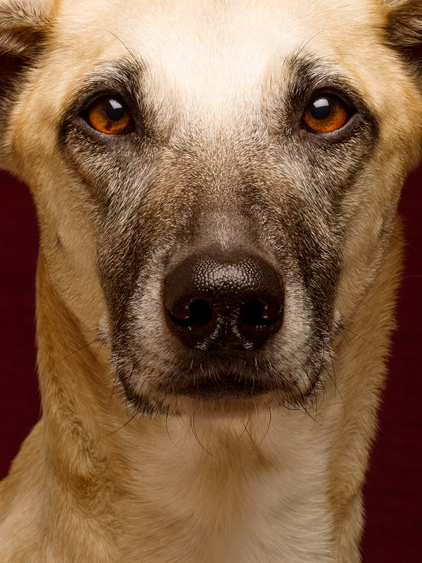 Photograph Too good to be true by Elke Vogelsang on 500px