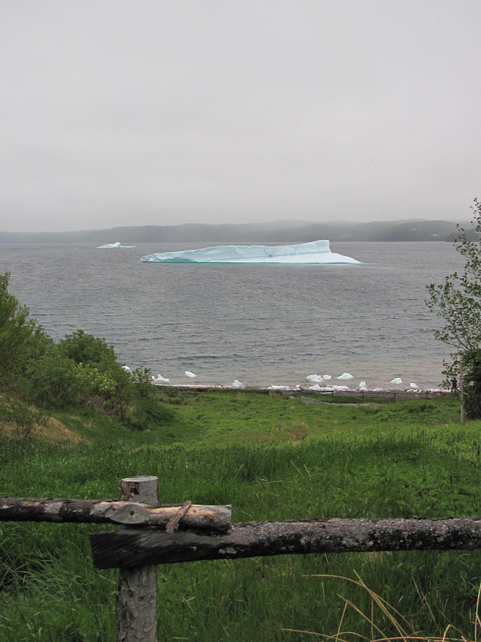 Icebergs arrive in Smith Sound Newfoundland after a 3 year journey from the glaciers of Greenland