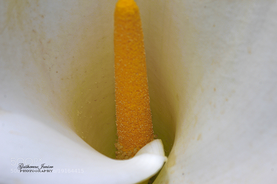 Photograph poderoso amarelo. by guilherme junior on 500px