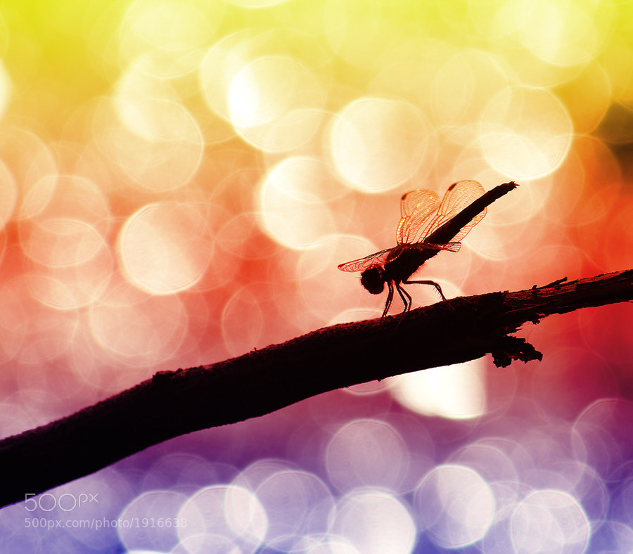 Photograph the bokeh by Prachit Punyapor on 500px