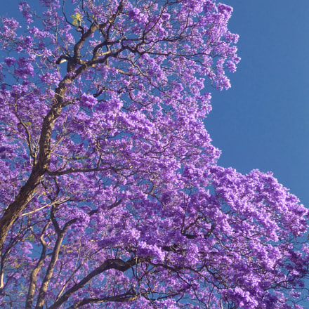 Jacaranda, Panasonic DMC-FT20
