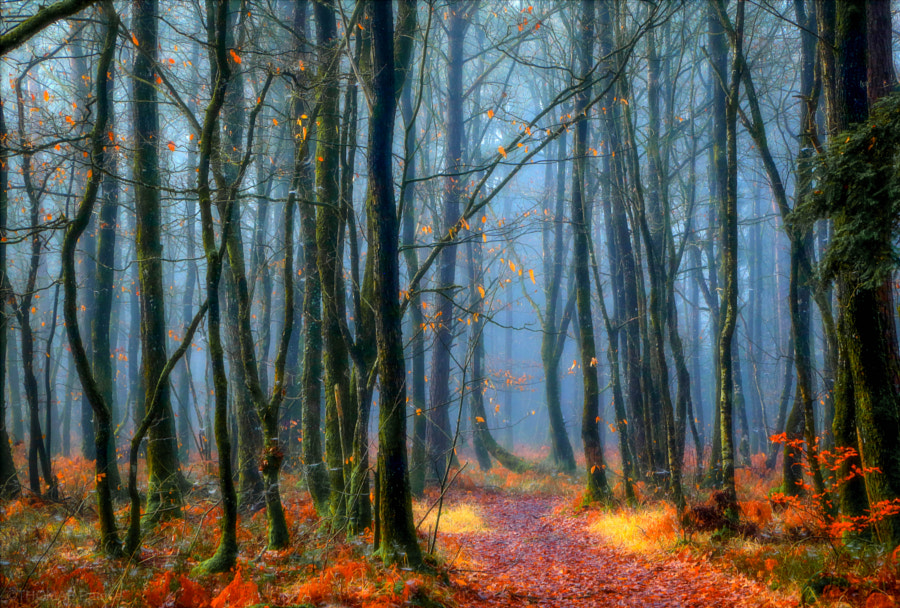 Forest mood! by Patrice Thomas on 500px.com