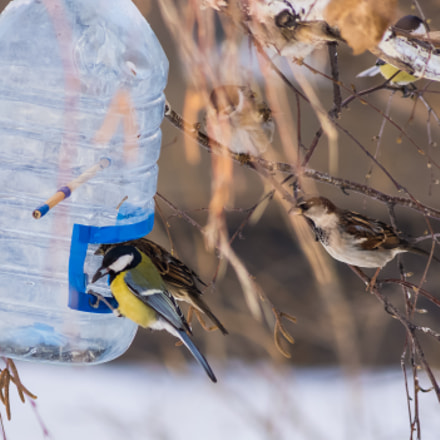 Titmouse and sparrows, Sony SLT-A65V, Tamron AF 55-200mm F4-5.6 Di II LD Macro