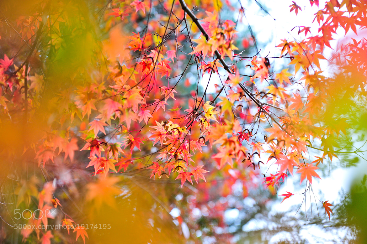 Photograph autumn leaves by Q- Chen  on 500px