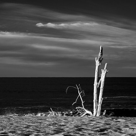 different views of driftwood, Canon EOS D60