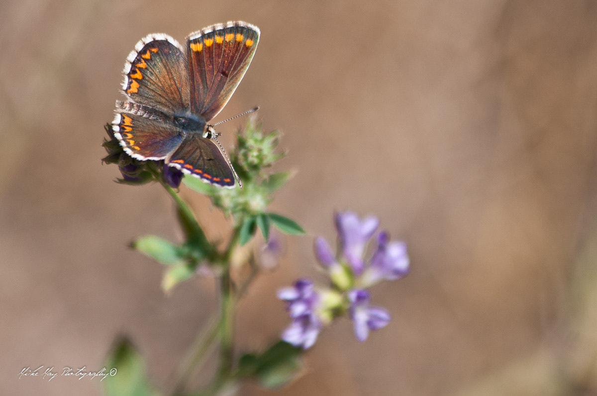 Photograph Butterfly by Mike May on 500px