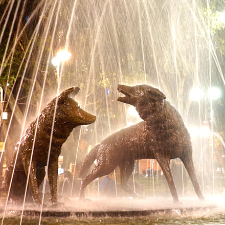 A coyote fountain, Sony ILCE-7M2, Sony FE 28mm F2