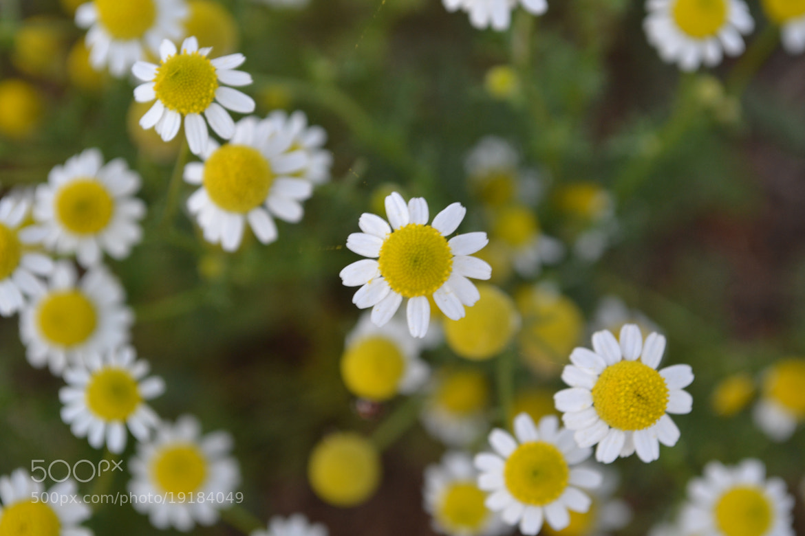 Photograph Flower by Jose  Ferreyra on 500px