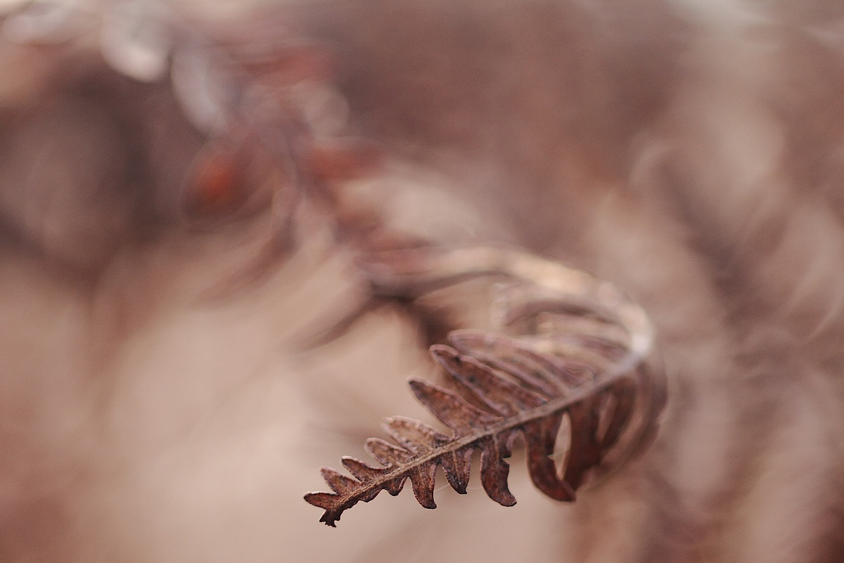 Photograph Fern by Sylvie Houtmann on 500px