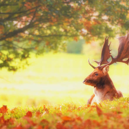 Lazy Stag