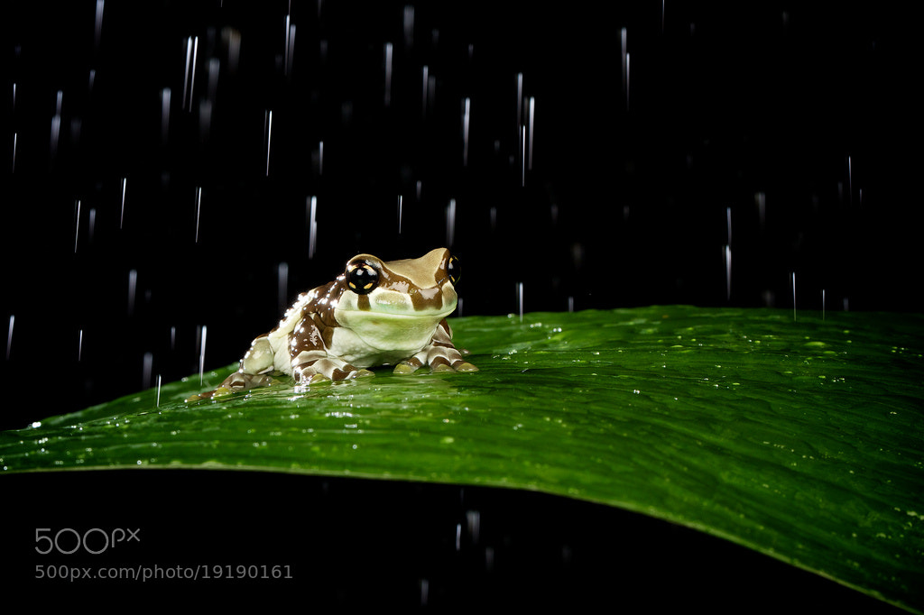 Photograph just singing in the rain... by Mark Bridger on 500px