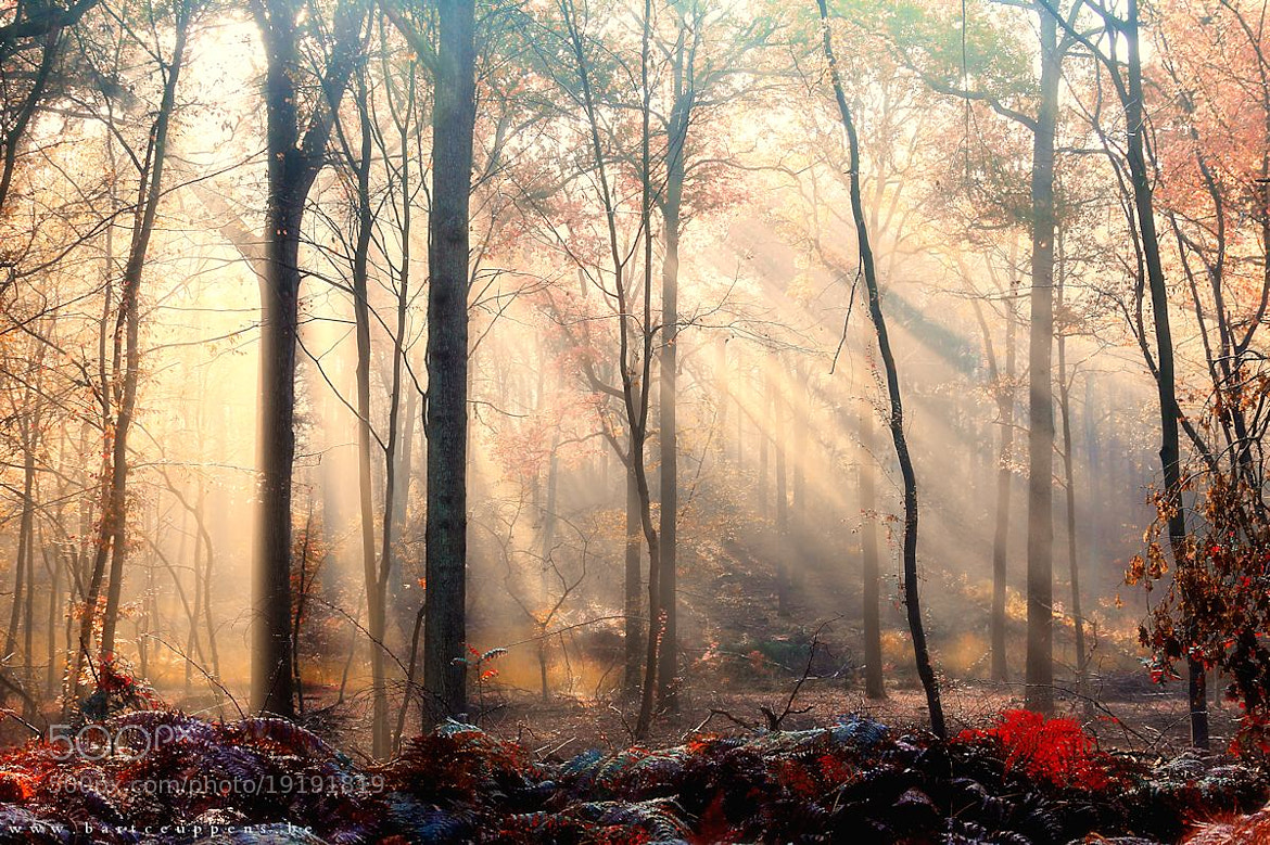 Photograph autumn mood 2 by Bart Ceuppens on 500px