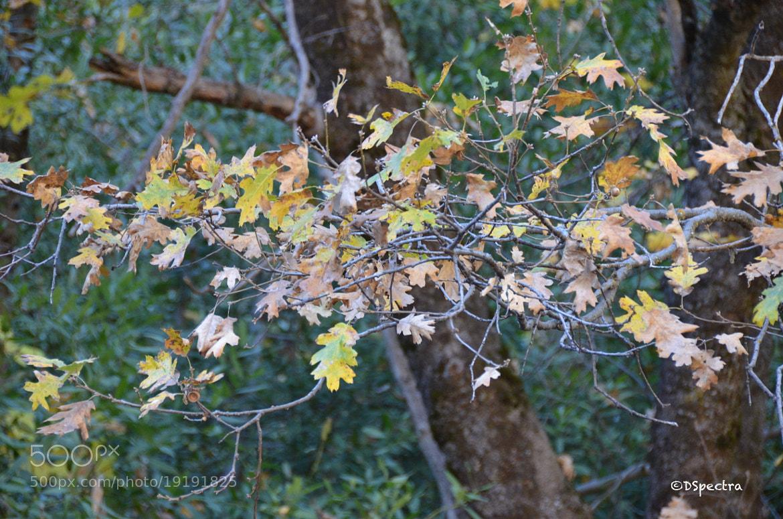 Photograph Save the trees! by Deep Dhanasekaran on 500px