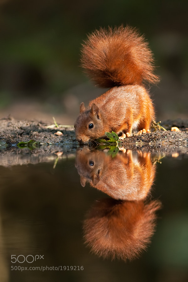 Photograph Upside down by Tom  Kruissink on 500px