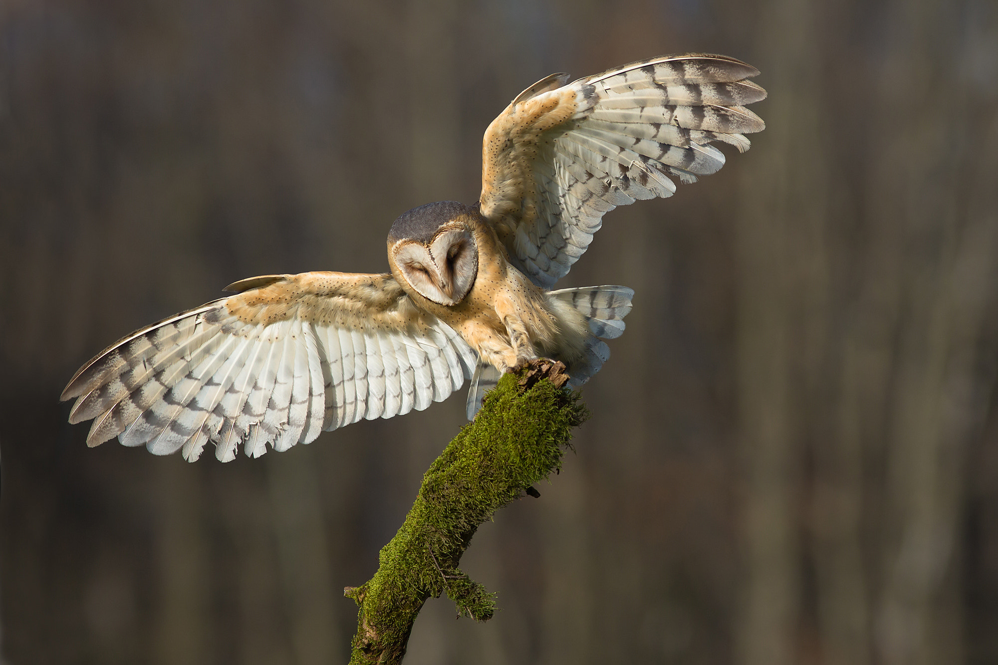 Photograph Angel - Tyto Alba by Milan Zygmunt on 500px