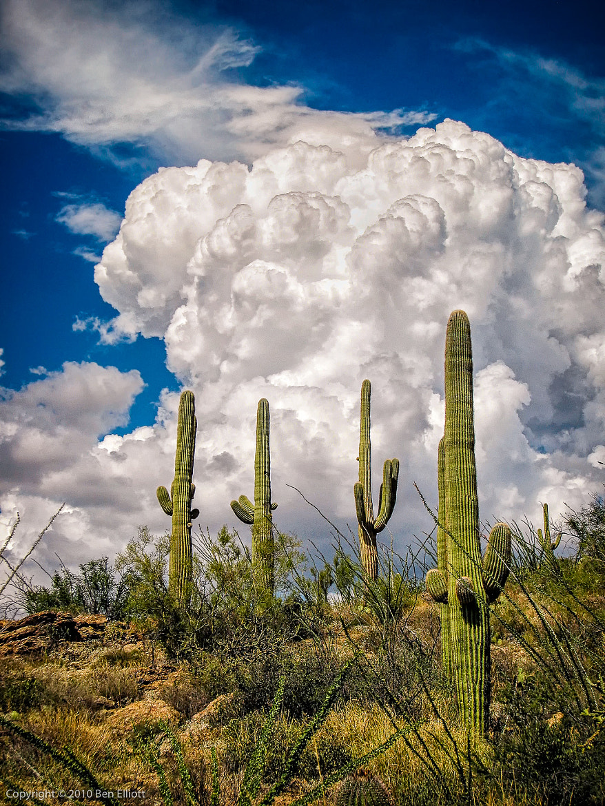 Photograph Saguaro Monsoon by Ben Elliott on 500px