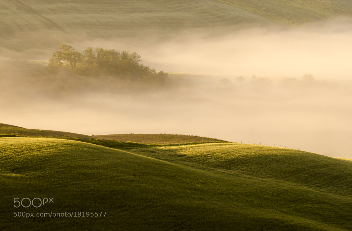 Photograph Misty Morning by Csilla Zelko on 500px