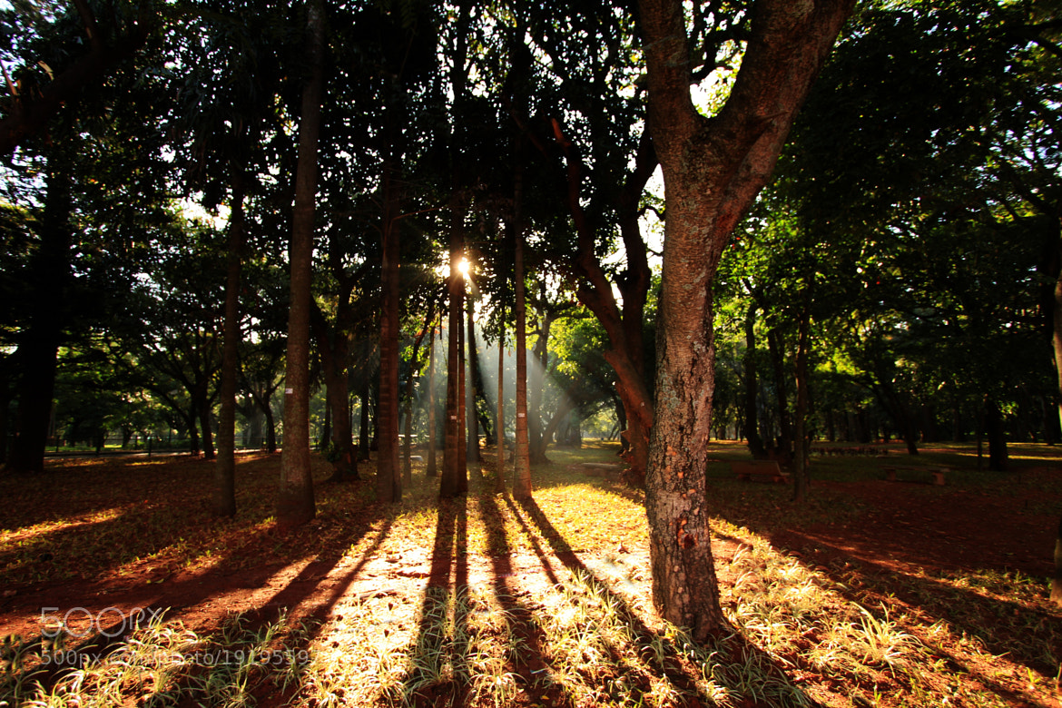 Photograph sunshine by Dhruv Ashra on 500px