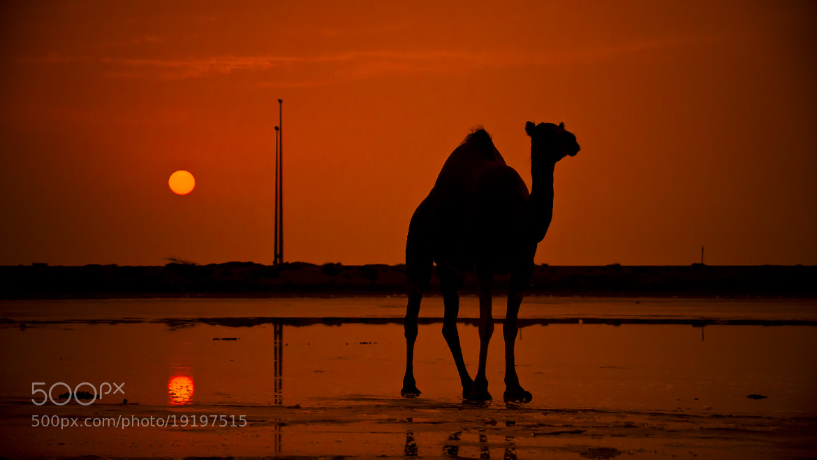 Photograph @ Sunset by Mohammed Abdo on 500px