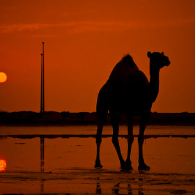 @ Sunset by Mohammed Abdo (MohammedAbdo)) on 500px.com