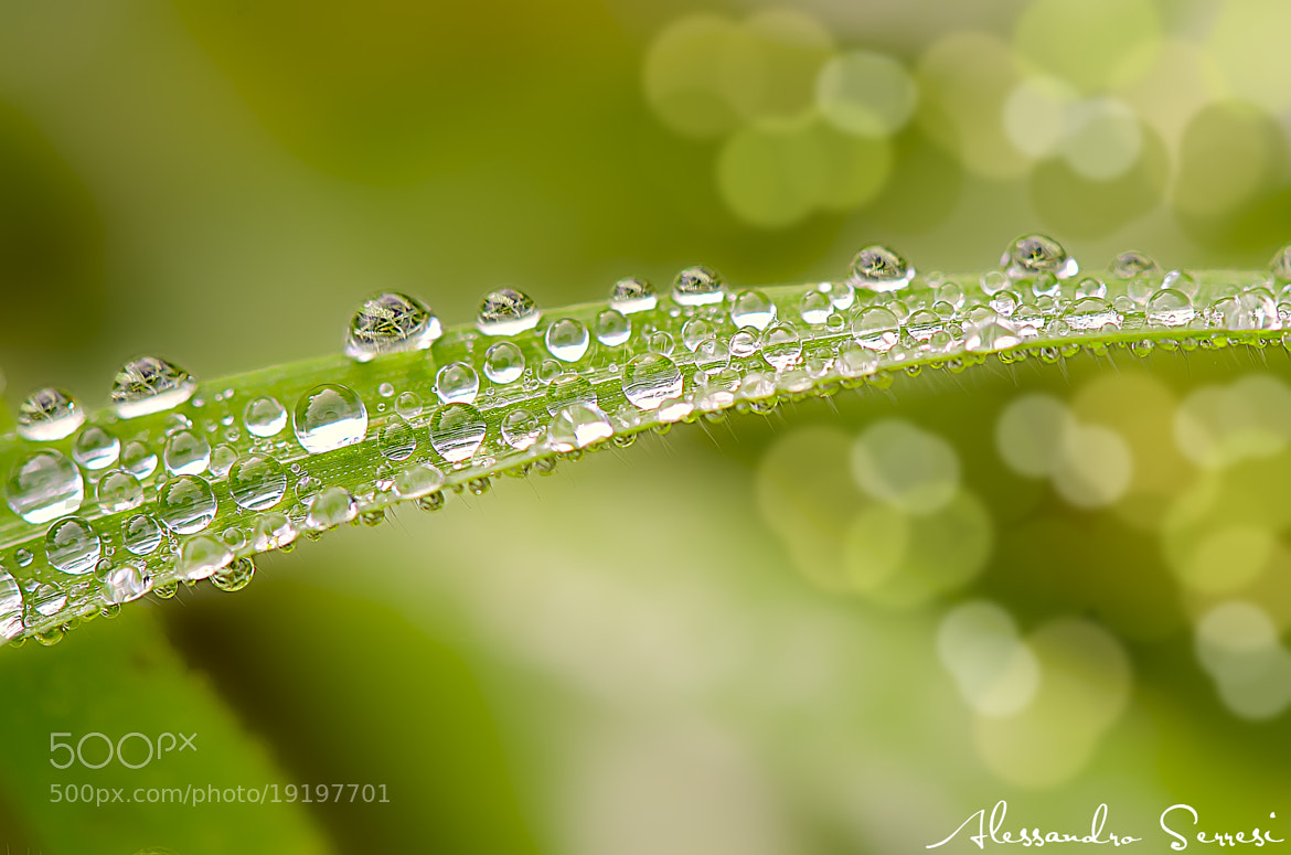 Photograph DROPS OF DIAMONDS by Alessandro Serresi on 500px