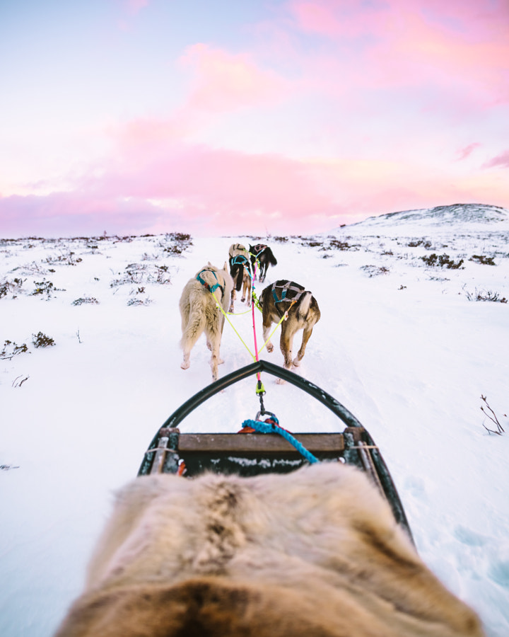 Had an amazing experience dog sledding in Norway!  ... by Oscar Nilsson on 500px.com