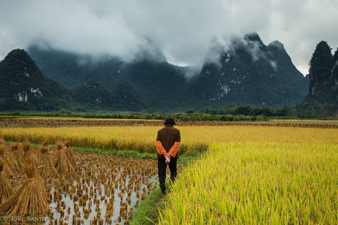 Photograph Golden Fields of Solitude by Joel Santos on 500px