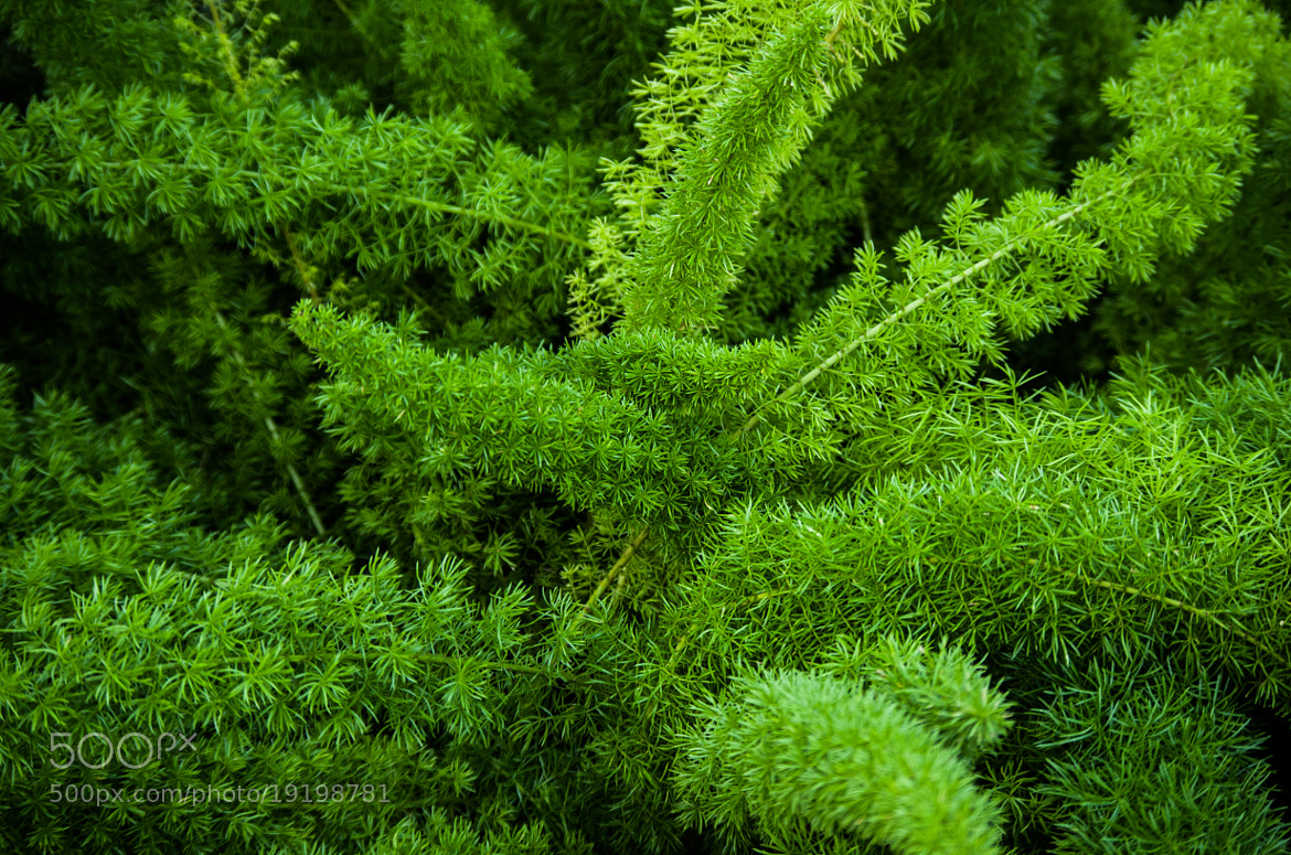 Photograph Green Fern by Johannes K. on 500px