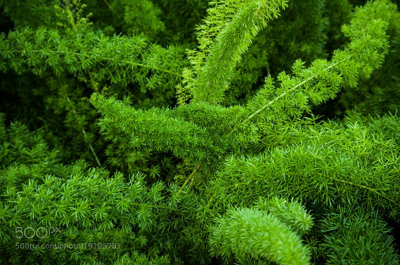 Photograph Green Fern by Johannes K. on 500px