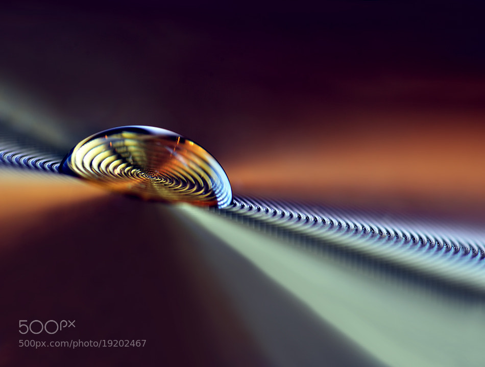 Photograph Golden rings by Heidi Westum on 500px