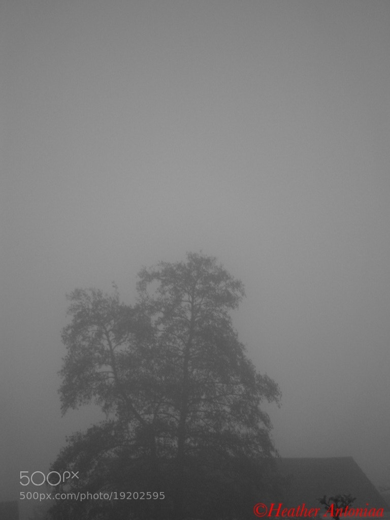 Photograph Foggy day by heather antoniaa on 500px