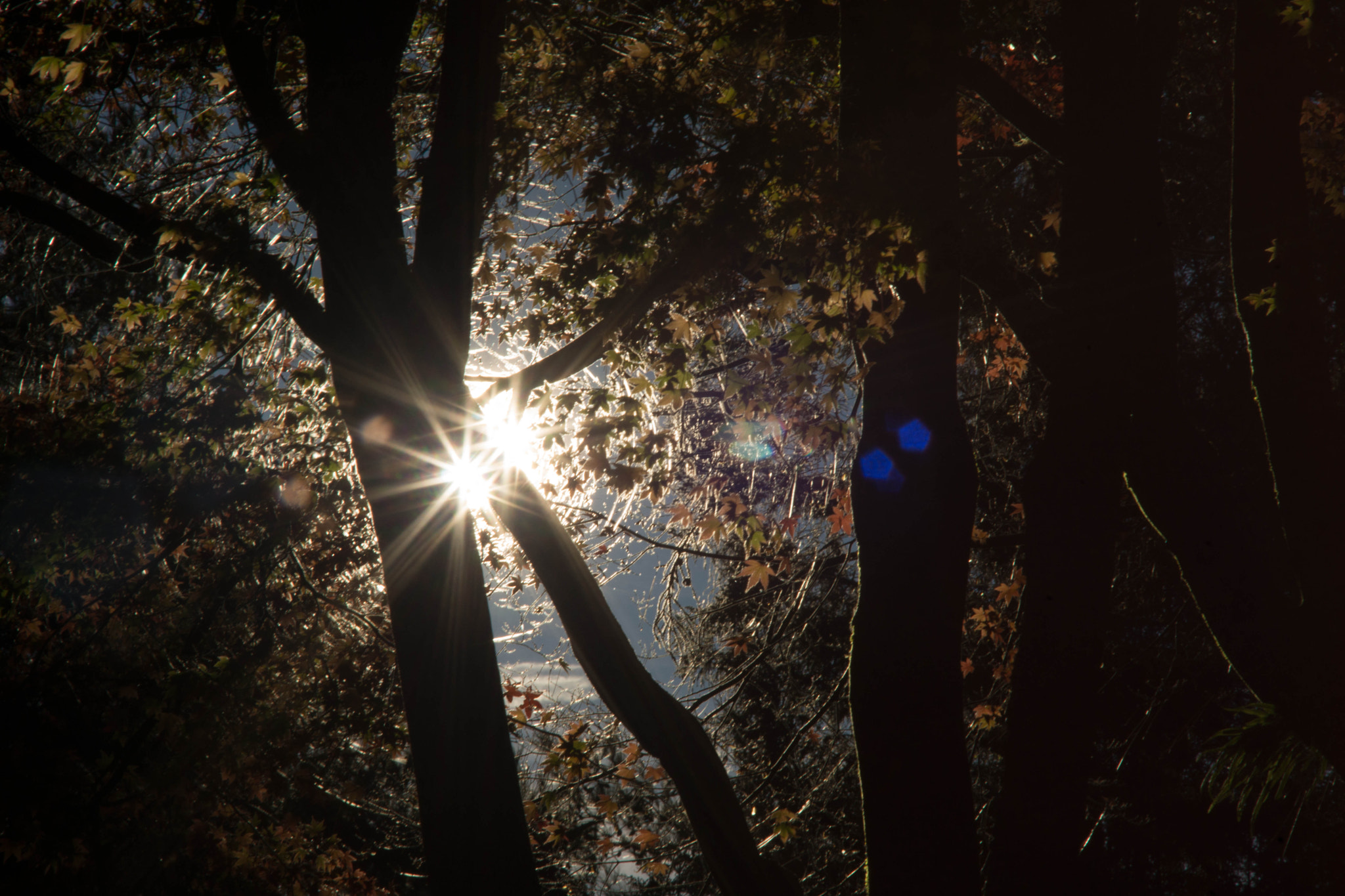 Photograph rotate leaves around the sun by Mingda Jiang on 500px