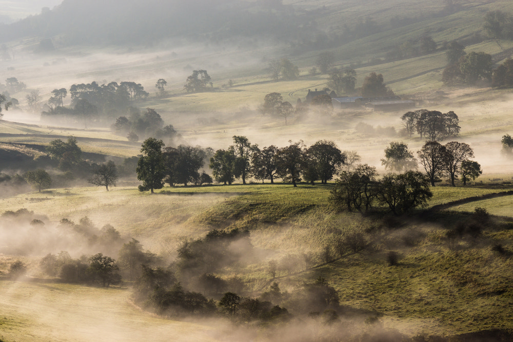 Photograph Misty Dove by James Grant on 500px