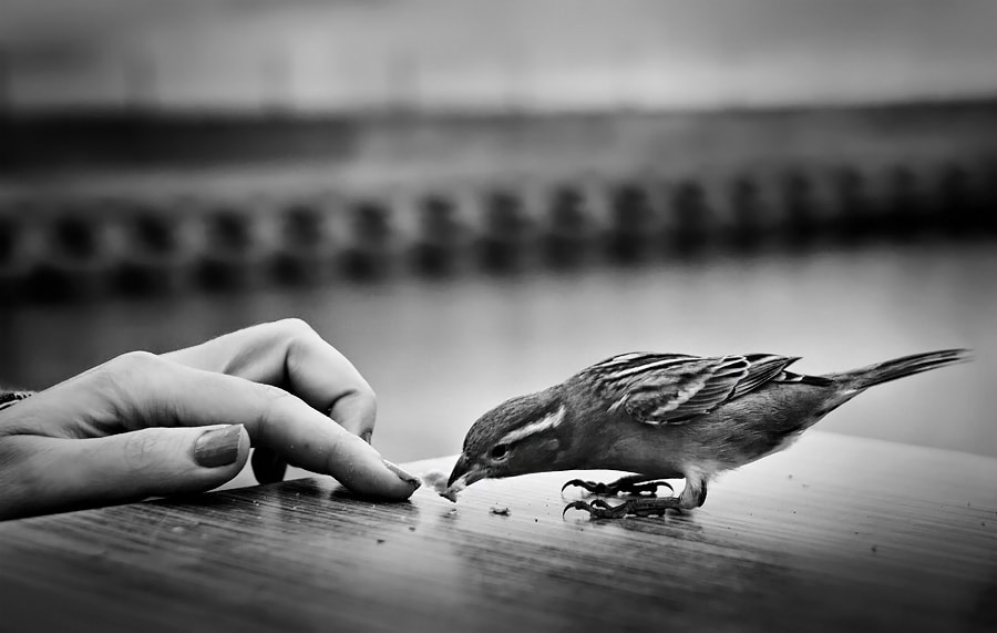 Photograph hungry bird by Timucin Toprak on 500px