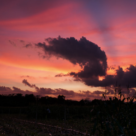 Sunset over the Harvest, Fujifilm X-A2, XC16-50mmF3.5-5.6 OIS II