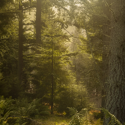 Forest Sunrise, Canon EOS 5D MARK II, Canon EF 24-105mm f/4L IS USM