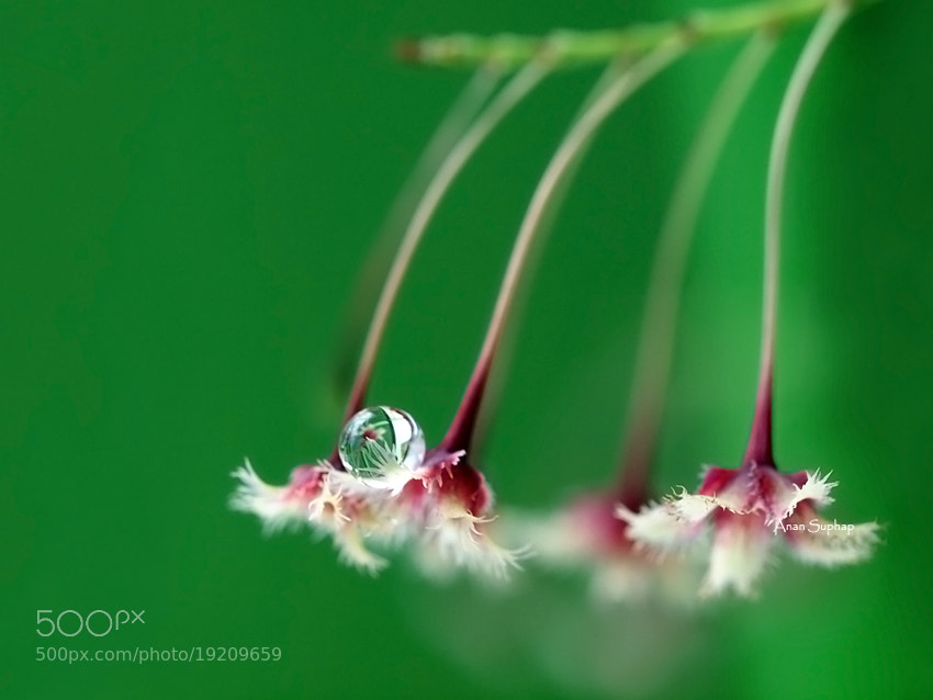Photograph ^0^.. by Anan Suphap on 500px
