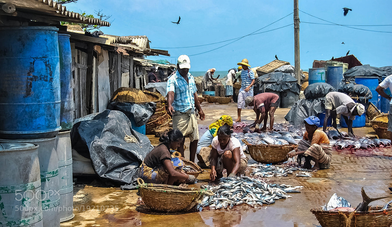 Photograph Gutting - Negombo by julian john on 500px