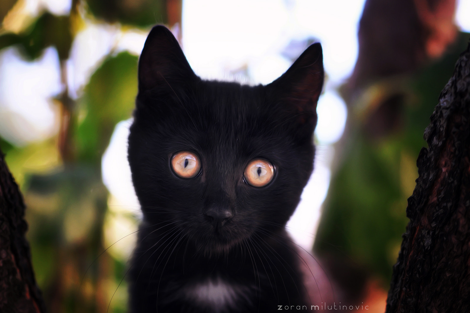 Photograph Glowing eyes by Zoran Milutinovic on 500px