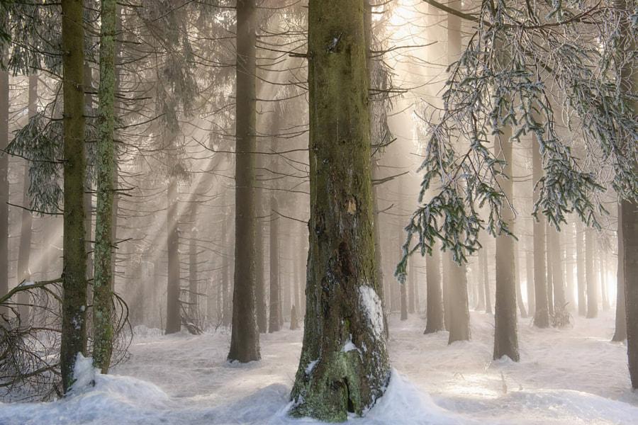 Winter Wonders II by Lars van de Goor on 500px.com