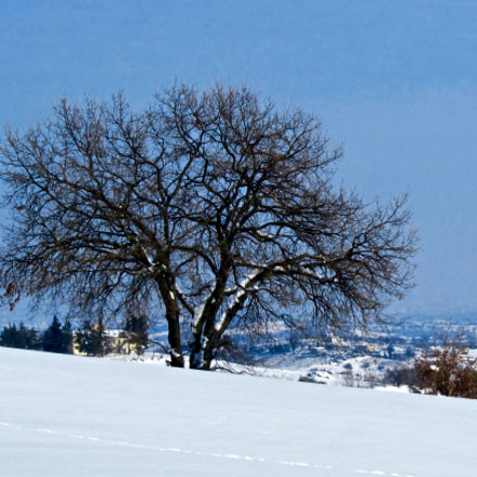Lonely tree, Canon POWERSHOT SX210 IS
