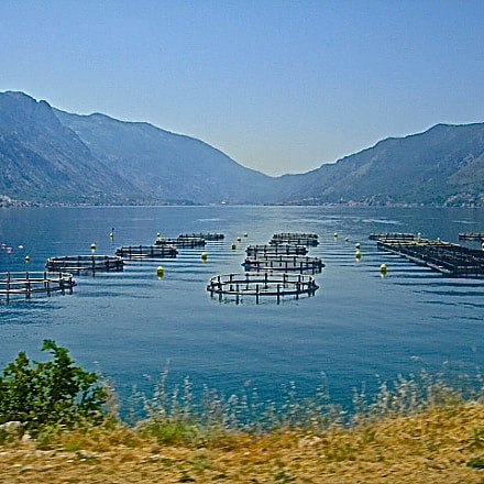 Fishing traps in Kotor, Sony DSC-T90