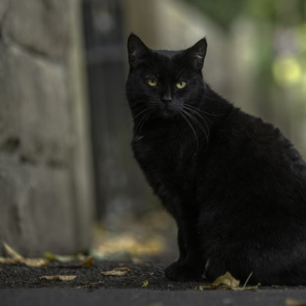 black cat, Sony SLT-A99V, Tamron SP AF 70-200mm F2.8 Di LD IF Macro
