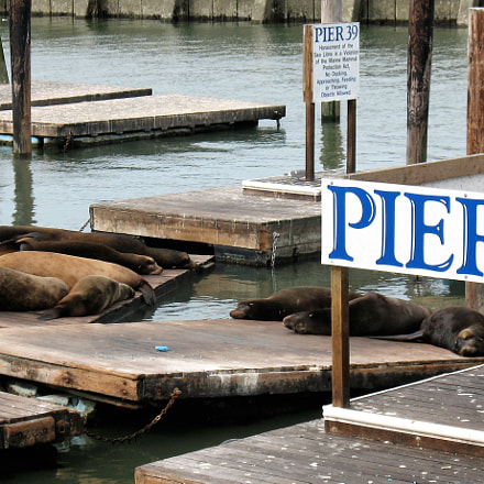 Napping Sea Lions at, Canon POWERSHOT A630